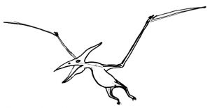 Pteranodon drawing for kids