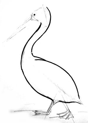 Walking Pelican drawing