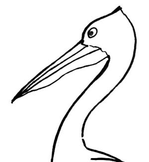 Pelican head drawing