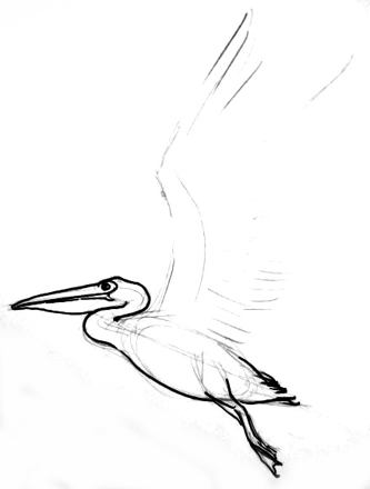 Pelican drawing lesson