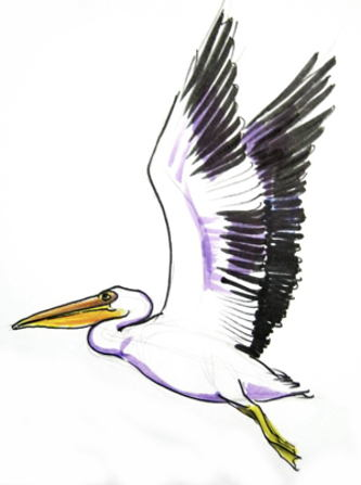 Pelican drawing in colors