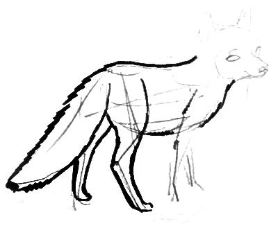 Fox cub drawing step by step