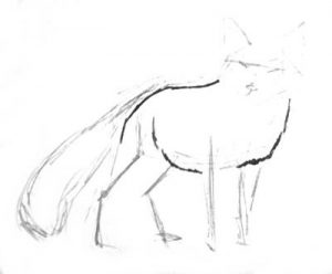 Baby fox phased drawing