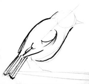 Small bird drawing step by step