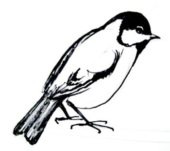 Great Tit line drawing 13