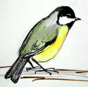 Great Tit drawing 49