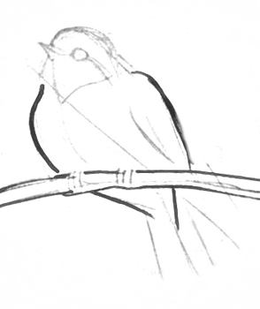 Bird drawing step by step