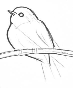 Small bird drawing