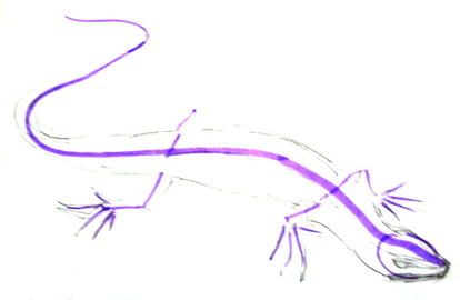 Lizard scheme of structure