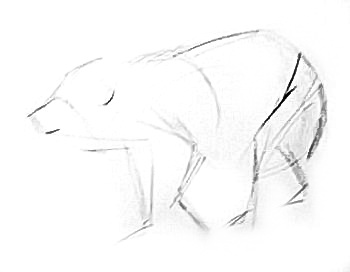 white bear cub outline
