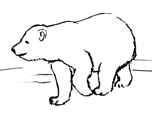 polar bear baby line drawing