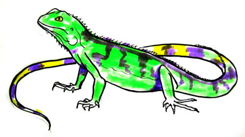 Iguana colored drawing