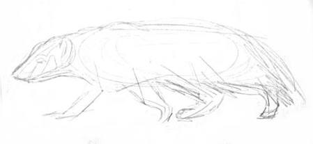 American badger pencil sketch