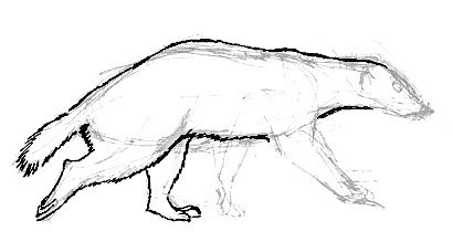 Honey badger drawing tutorial