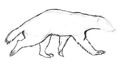 Honey badger step by step drawing tutorial