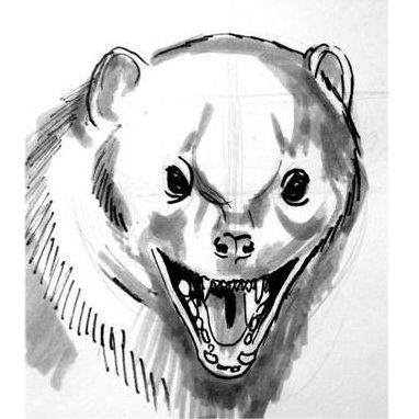 Mongoose head and face drawing