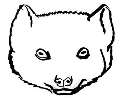 Mongoose face line drawing