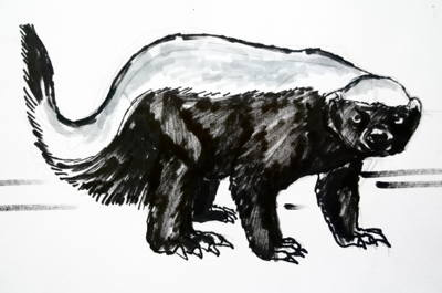 Honey badger picture