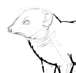 How to draw a mongoose head and face