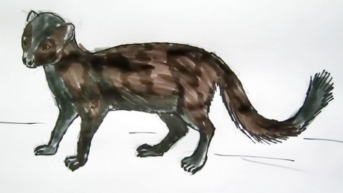 Mongoose colored drawing