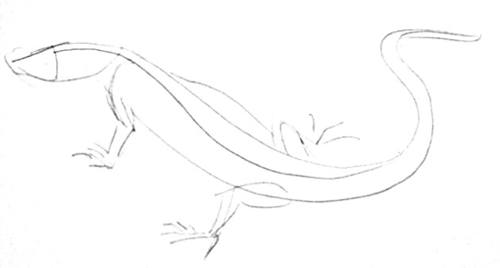 Monitor Lizard outline