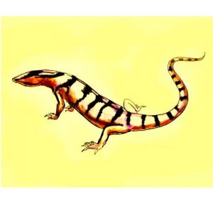Monitor Lizard colored drawing