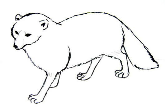 Arctic fox line drawing