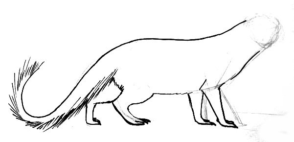 Mongoose drawing step by step