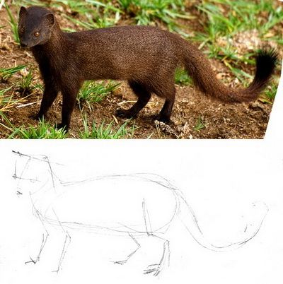 Mongoose drawing tutorials