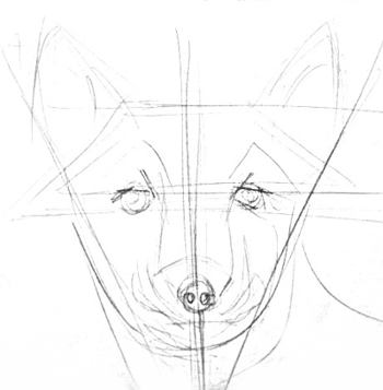 Fox head drawing