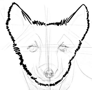 Polar fox head drawing step by step