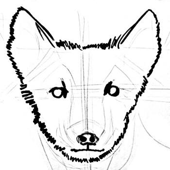Polar fox head and face drawing