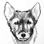 How to draw an Arctic (polar) Fox