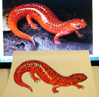Red salamander drawing