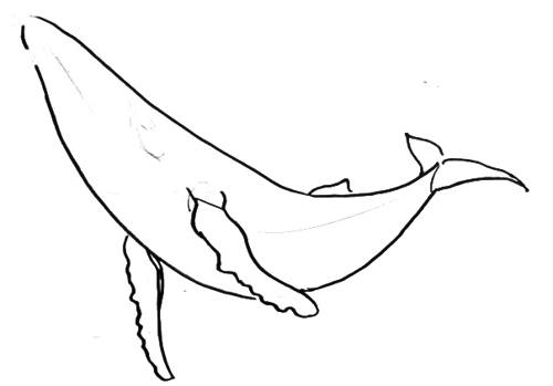 Humpback Whale step-by-step drawing
