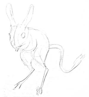 Jerboa pencil sketch