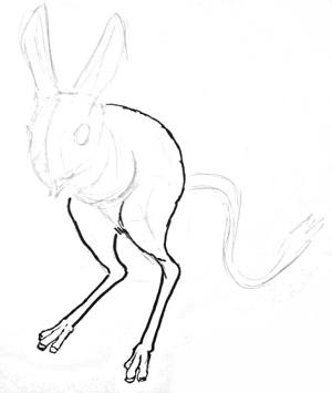 Jerboa hind legs drawing