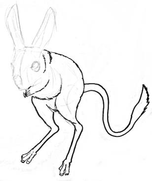 Jerboa step by step drawing lesson