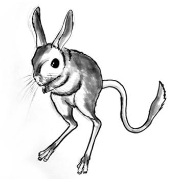 Jerboa picture