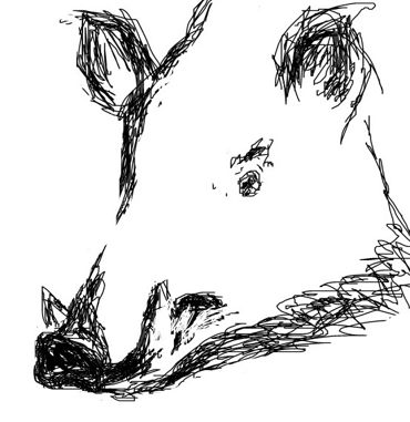 Wild Hod Head drawing