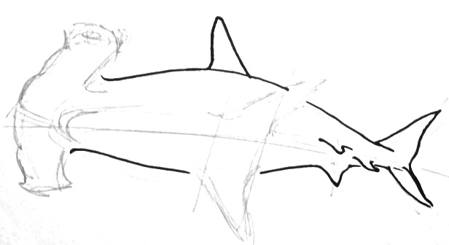 Hammerhead drawing step by step
