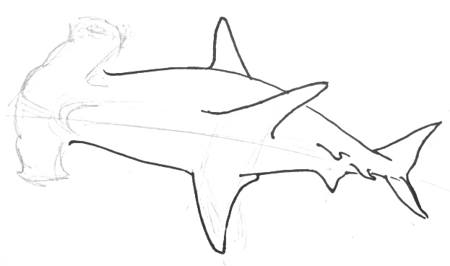 how to draw a hammerhead shark 028