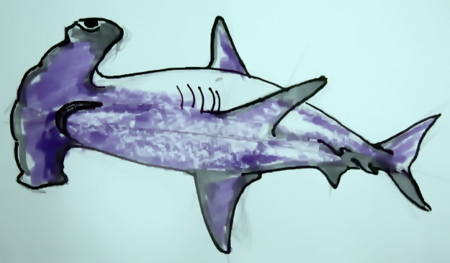 Hammershark colored drawing