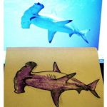 How to draw a hammerhead