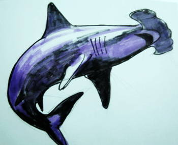 Hammerhead colored picture