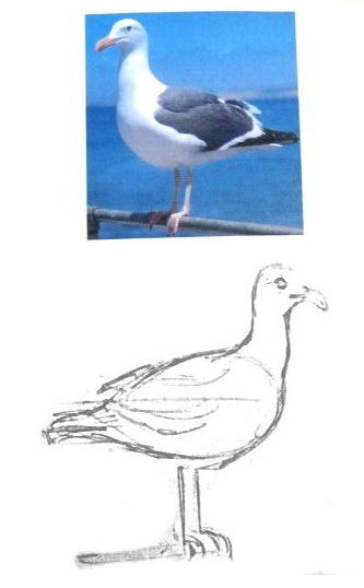 How to draw a seagull.