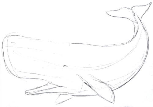 Sperm Whale pencil outline