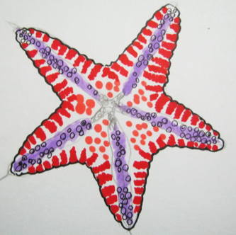 Sea star drawing