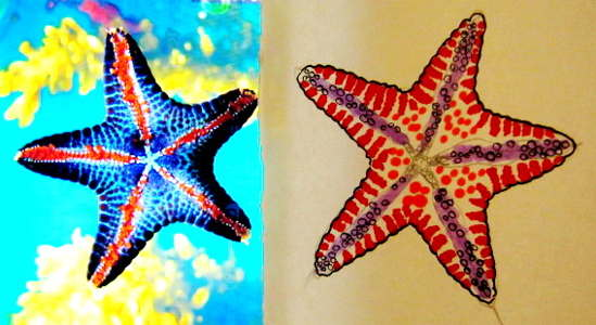Starfish drawing -3