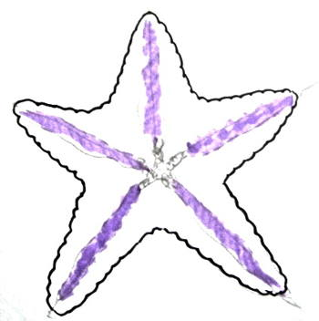 Starfish drawing 9